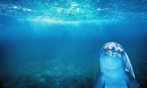 Εκατομμυριούχος γυναίκα παντρεύτηκε δελφίνι και έμεινε χήρα (photo)